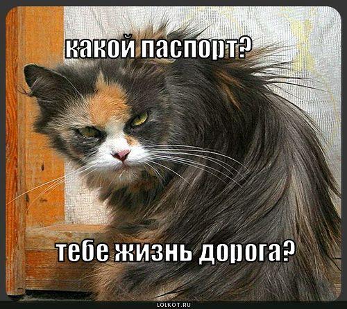 http://wild-cats.clan.su/_fr/0/7046039.jpg